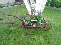 Planted flowers in my antique wheel barrel