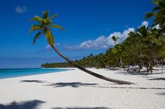 Ostrov Saona - Dominákánská republika by Ivana Piskáčková Palm Trees, Flora, Coast, Ocean, Awesome, Beach, Outdoor Decor, Water, Palm Plants