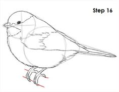 Pencil Drawing Tutorials How to draw a chickadee bird by Bird Drawings, Animal Drawings, Pencil Drawings, Bird Pencil Drawing, Drawing Birds, Pencil Art, Pencil Drawing Tutorials, Art Tutorials, Drawing Ideas