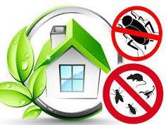 Απολυμάνσεις!! Για περισσότερες πληροφορίες:  Τηλ.Eπικοινωνίας: 211 40 12 153  Site: www.techniki-express.gr   Email: info@techniki-express.gr Best Pest Control