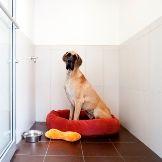 Pet Boarding vs. Pet Sitting - Which is ...