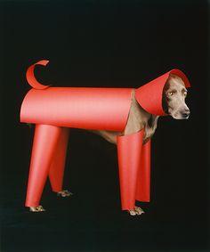 William Wegman, Red Toy, 2006