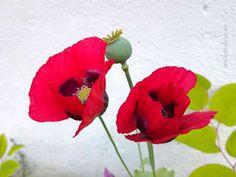The surprise in the backyard - Entheodora Beautiful Flowers, Backyard, Rose, Plants, Patio, Pink, Backyards, Plant, Roses