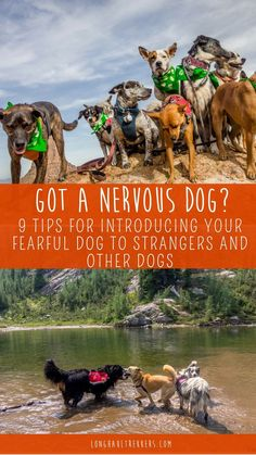 Training your dog is centered on building your relationship with your canine as well as establishing boundaries. Be firm but consistent and you'll notice amazing results when it comes to your dog training efforts. Dog Training Classes, Dog Training Tips, Training Online, Training Schedule, Training Videos, Potty Training, Dog Hacks, Old Dogs, Dog Behavior