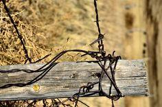Fence post on a ranch along Highway 2 in the sandhills of Nebraska.