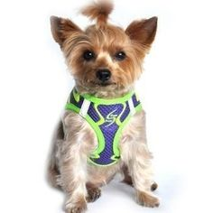 American River Neon Sport Choke-Free Dog Harness - Ultra Violet