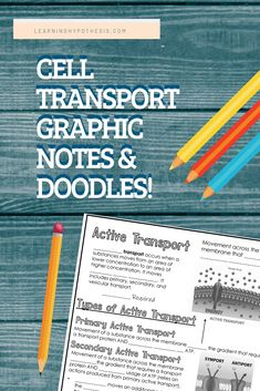 Graphic notes are a great alternative to interactive notebooks. This set includes cell membrane structure, cell transport overview, passive transport, osmosis, and active transport. Membrane Structure, Cell Structure, Cell Membrane, Cell Biology, Ap Biology, Science Notebooks, Interactive Notebooks, Passive Transport, A Level Biology