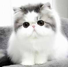 Top 10 Cutest Cat Breeds That Will Make You Smile | Easyday