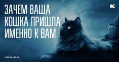Признанной защитницей человека считается собака. Кошка же на прохожих не лает, не бросается. Но именно она хранит дом от вторжения настоящего зла — негатива из Тонкого мира, незваных гостей, которых просто так не увидишь.