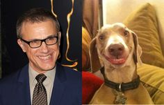 The 2013 Oscar Nominees And Their Animal Doppelgängers. These made me giggle.