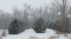 Heavy snow fall.  - http://earth66.com/winter/heavy-snow-fall/