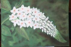 bloem vlinderstruik   pastelkrijt