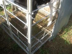 Renovation of calf pens in Sout Yahoo Images, Pens, Calves, Image Search, Outdoor Structures, Baby Cows, Tone Calves