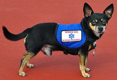 Max_300_what-is-a-service-dog