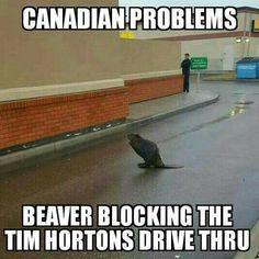 Only In Canada. Canada's source for news, culture, food, travel and memes. Canadian Things, I Am Canadian, Canadian Humour, Funny Canadian Memes, Canada Funny, Canada Eh, Canada Jokes, Canadian Stereotypes, Meanwhile In Canada