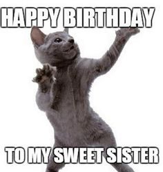 """These Birthday Memes for you. So scroll down and keep reading these """"Top 24 Happy Birthday Meme For Her"""". Happy Birthday Girl Quotes, Happy Birthday Little Sister, Happy Birthday Animals, Funny Happy Birthday Meme, My Sweet Sister, Happy Birthday Friend, Happy Birthday Images, Birthday Humorous, Sister Meme"""