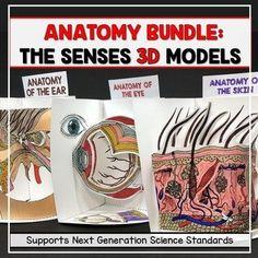 Anatomy 3D Model Bundle - Senses: Ear, Eye, and Skin. Did you know that when your students are developing and using models, they are engaging in the practices of theScience and Engineering Process focused on in the Next Generation Science Standards (NGSS)?