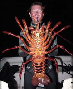 AWESOME GIANT LOBSTER WEIGHT 6 KG WAS CAUGHT!