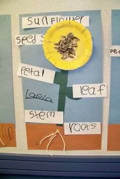 Making & labeling parts of a sunflower