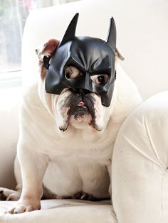 Bulldog - really I wold never have guessed - I thought is was the Dark Night without his body armor after a particulars heavy donut session?