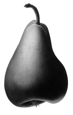 "Single Pear in Charcoal Dust by Susannah Blaxill ""The shape of the pear is akin to that of the human form. The medium of charcoal, which is perfect for gradations of light and dark, has been used to depict the pear's flowing form and its sensuous curves."" Susannah is a modern Australian artist specializing in botanical watercolors and pencil drawings. Her life and work are featured on www.blaxill.com"