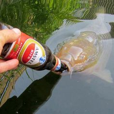 for more great carp pics and carp fishing tips go to www, Fishing Bait