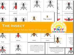 Montessori Nomenclature Cards FREE