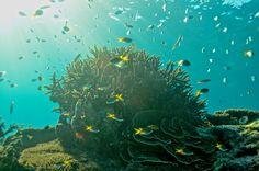 Lady Elliot Island - (Photo Courtesy of Ben Southall) #thisisqueensland #Australia #thegreatbarrierreef