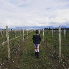 After 2 days of #rain the #sun popped up & the #beautiful #blue #sky broke through the #clouds...perfect for a stroll through the #vineyards of the #Marlborough Wine Region... #travel #adventure #traveller #explore #vineyards #sunshine #holidays #vacation #marlboroughwineregion #newzealand #nz #happyholi #wanderlust #leggings #tights #yogapants #yoga