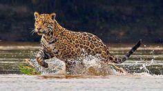 Fauna / Amazona