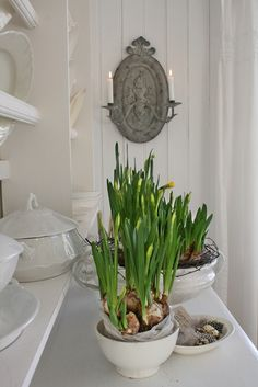 Spring bulbs in white ironstone- lovely to welcome spring