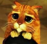 Znalezione obrazy dla zapytania kot ze shreka