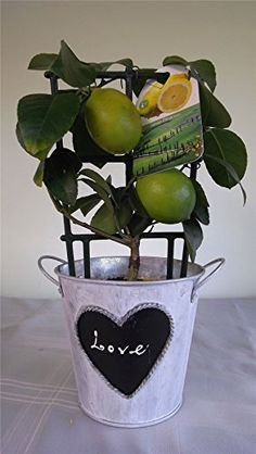 1000 images about diy gifts on pinterest housewarming for Indoor plant gift ideas
