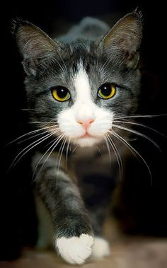 Cute pictures of cats - Community - Google+