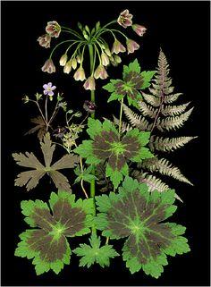 A Plant-Mosaic; by Ellen Hoverkamp
