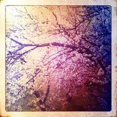 Sfumature di #primavera. #Foto di Cristiano Luchini con #Nokia 6680.