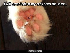 Funny Pets... Well, This Changes Everything Completely