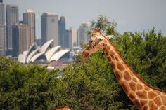 The view from the Taronga Zoo in Sydney