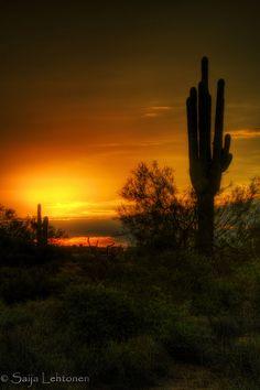 Saguaro Sunrise, Arizona