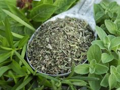 Oregano is your natural protection against infection.  The active compounds in oregano are carvacrol and thymol. These compounds have strong antiviral, antibacterial, and antifungal properties. Oregano helps get rid of intestinal parasites, kills the bacteria that causes food poisoning, heals ulcers, calms intestinal irritation, and aids in digestion. It has a lot of minerals, antioxidants, fiber, and omega-3 fatty acids. Does it get any better?