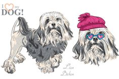 Lowchen (Lion Bichon) Dog SET by kavalenkava on @creativemarket