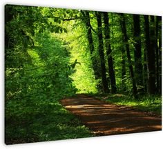 Ons bos is een oase van rust