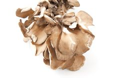 Maitake: il fungo che danza