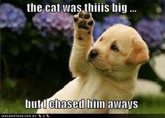 The cat waz thiiiis BIG and I chased him aways