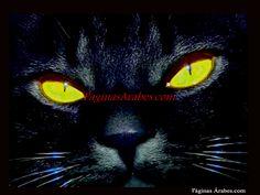 El Gato Negro - La Leyenda