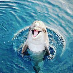 Beautiful Sea Creatures, Cute Creatures, Animals Beautiful, Happy Animals, Cute Animals, Dolphin Photos, Underwater Painting, Pets 3, Pug Puppies