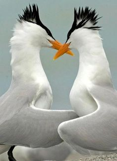 The Lovers | See More Pictures | #SeeMorePictures