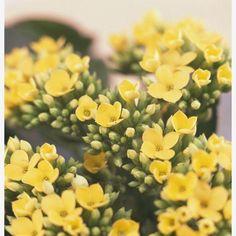 Añadir plantas al diseño de cualquiera de las estancias de la casa aportará un toque de frescura y color. ¡No te lo pierdas!