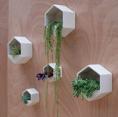 Fabulous wall planters indoor living wall ideas 33 - Your succulent garden is currently finished! Normally, mass-produced pots are somewhat more affordable. Planters are large pots meant for holding plants, brings a distinctive glam to the house decor. Vertical Wall Planters, Large Planters, Ceramic Planters, Hanging Planters, Planter Pots, Planter Ideas, Large Pots, Concrete Planters, Wall Mounted Planters Indoor