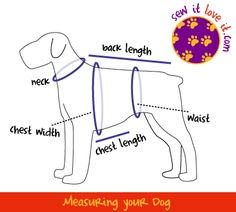 How to Measure a Dog Pretty simple, really but it's a good chart to have. I'd add in a rear end to waist measurement though! Might need tabs underneath & it would be good to know where they should go.
